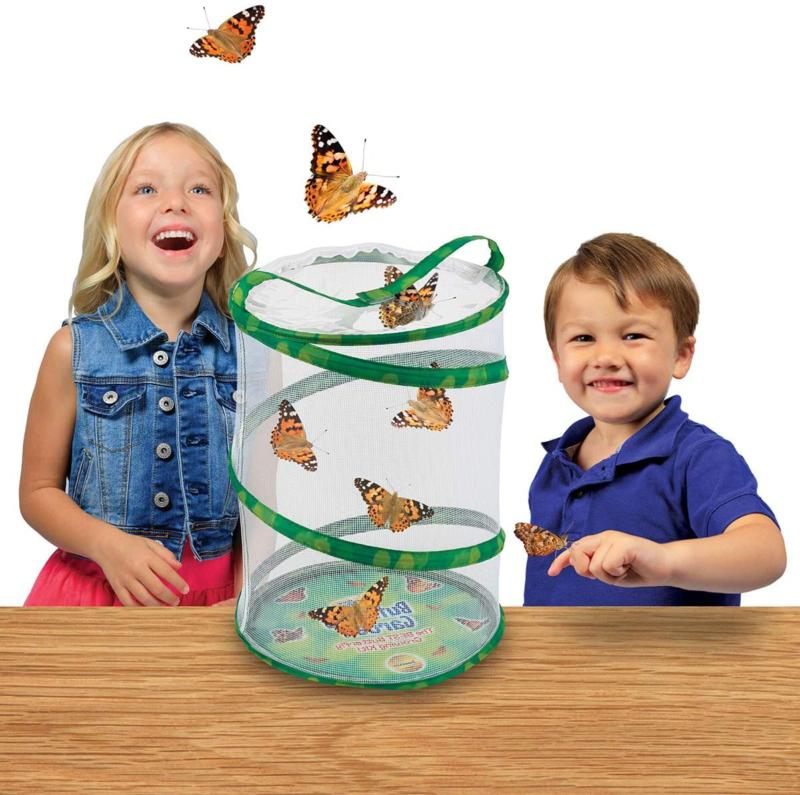 Insect Lore Kit - With To
