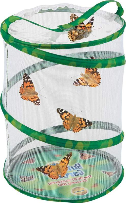 Insect Lore Butterfly Growing Kit To