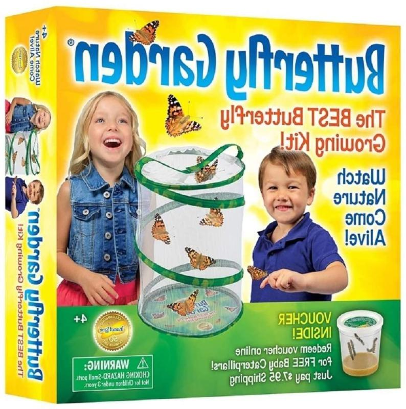 insect lore butterfly growing kit with voucher