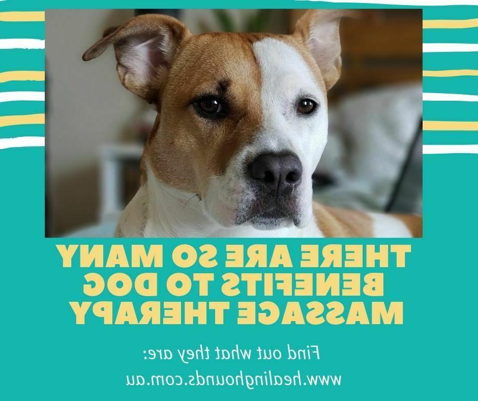 xmas gift voucher for 1 x dog